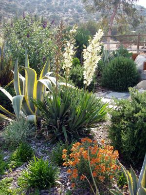 Villegas Landscaping, Sedona Arizona
